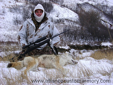 6mm coyote hunting